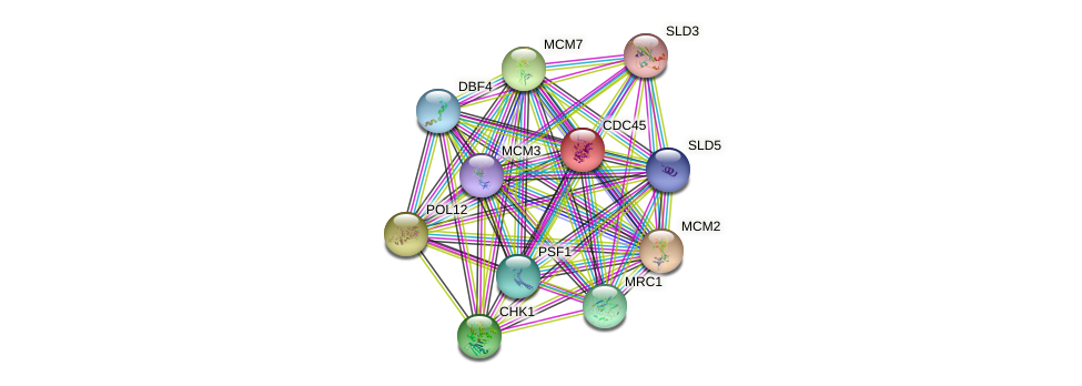 CDC45 protein (Saccharomyces cerevisiae) - STRING interaction network