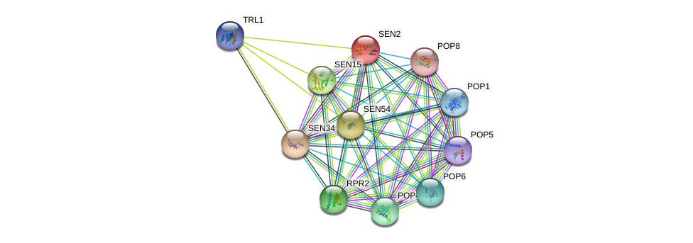 SEN2 protein (Saccharomyces cerevisiae) - STRING interaction network
