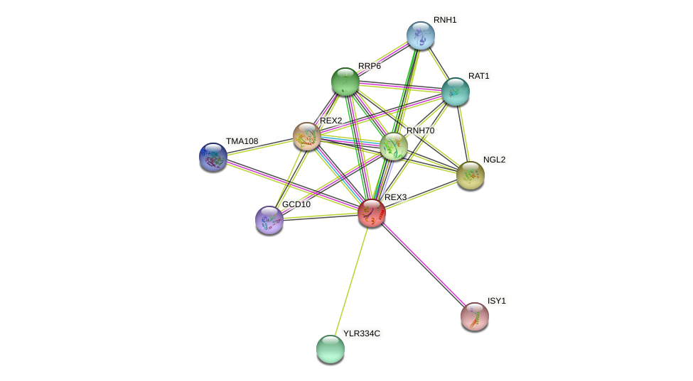 REX3 protein (Saccharomyces cerevisiae) - STRING interaction network