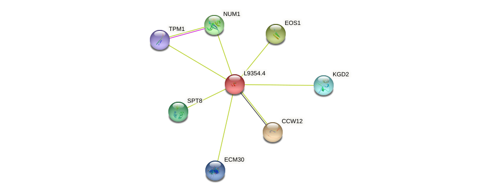 L9354.4 protein (Saccharomyces cerevisiae) - STRING interaction network