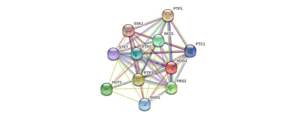 HOG1 protein (Saccharomyces cerevisiae) - STRING interaction network