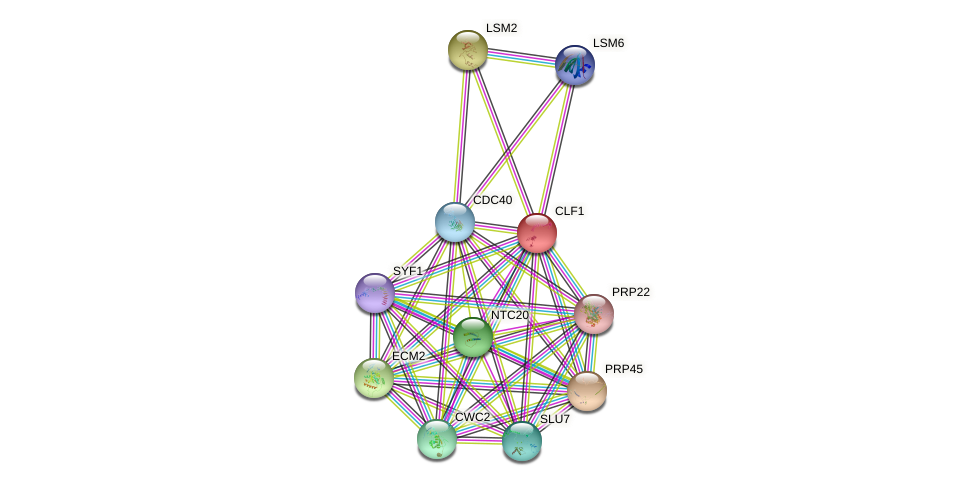 CLF1 protein (Saccharomyces cerevisiae) - STRING interaction network