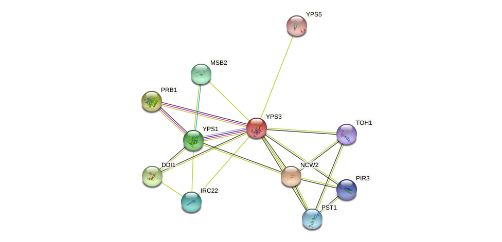 YPS3 protein (Saccharomyces cerevisiae) - STRING interaction network