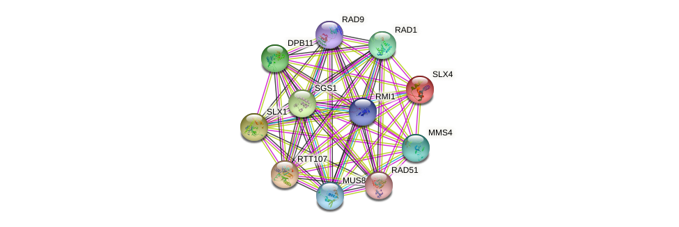 SLX4 protein (Saccharomyces cerevisiae) - STRING interaction network