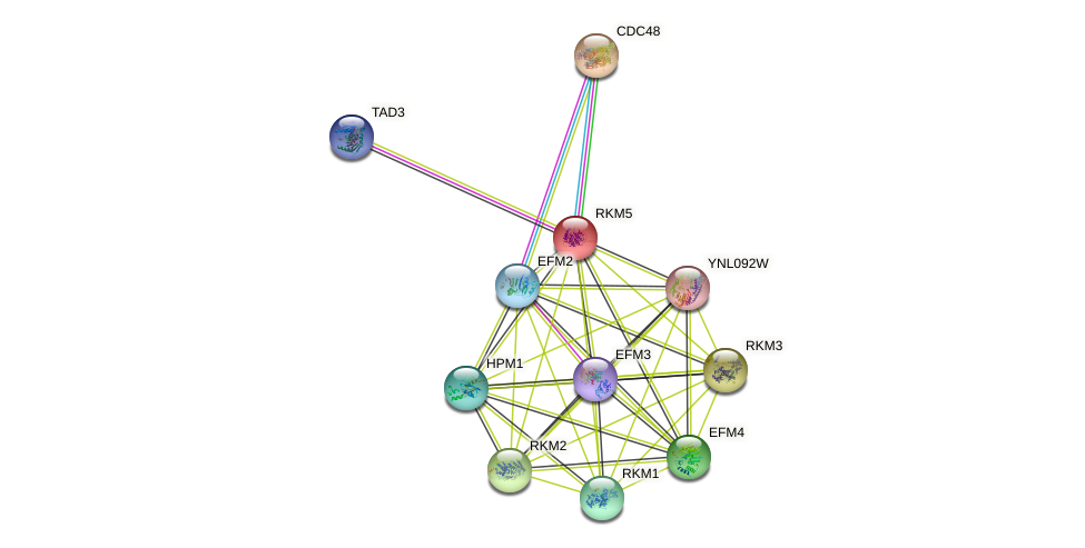 RKM5 protein (Saccharomyces cerevisiae) - STRING interaction network