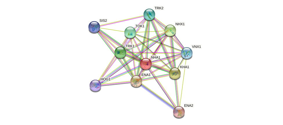 NHA1 protein (Saccharomyces cerevisiae) - STRING interaction network
