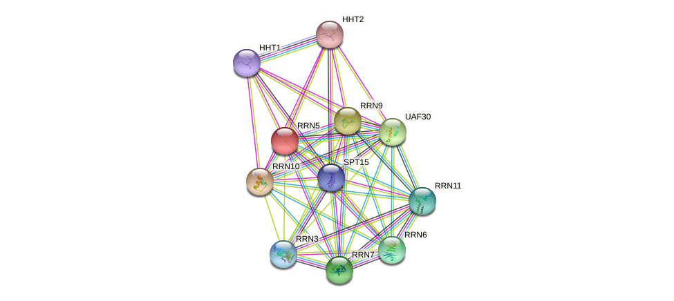 RRN5 protein (Saccharomyces cerevisiae) - STRING interaction network
