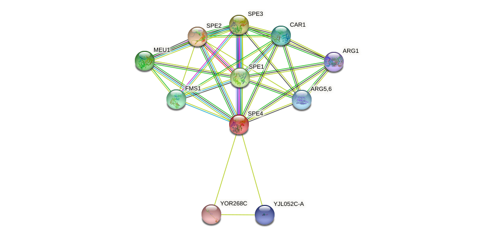 SPE4 protein (Saccharomyces cerevisiae) - STRING interaction network