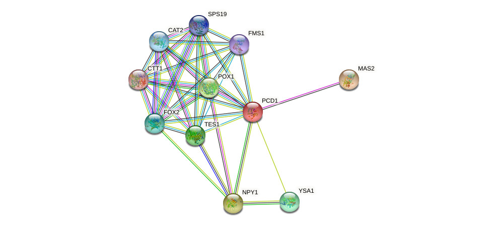 PCD1 protein (Saccharomyces cerevisiae) - STRING interaction network