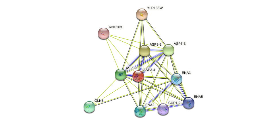 ASP3-4 protein (Saccharomyces cerevisiae) - STRING interaction network