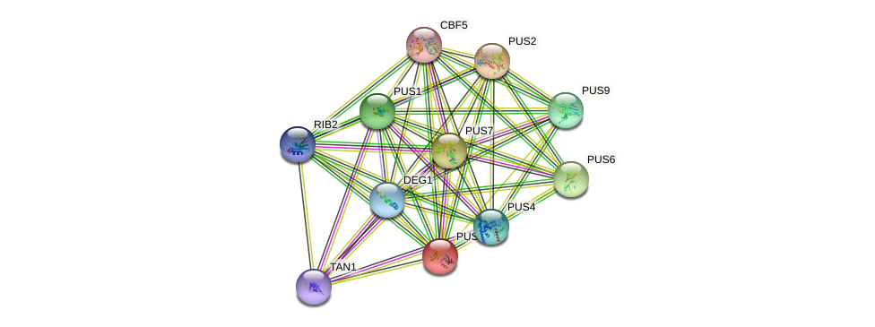 PUS5 protein (Saccharomyces cerevisiae) - STRING interaction network