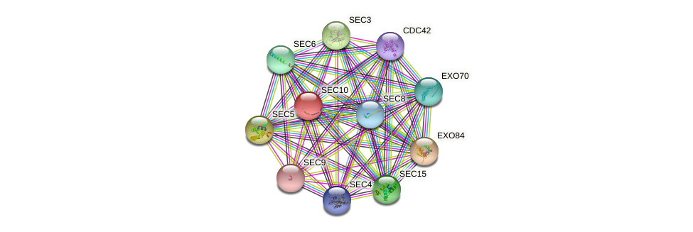 SEC10 protein (Saccharomyces cerevisiae) - STRING interaction network