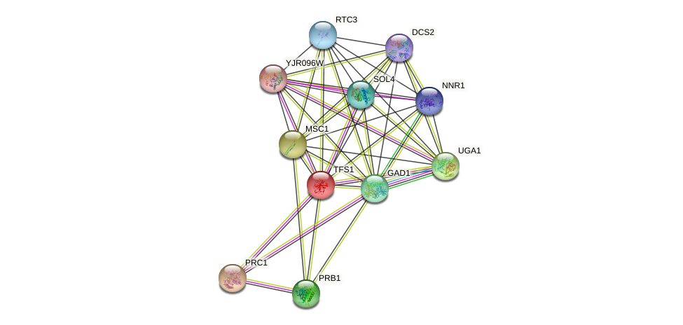 TFS1 protein (Saccharomyces cerevisiae) - STRING interaction network