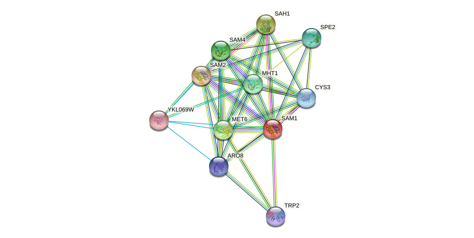 SAM1 protein (Saccharomyces cerevisiae) - STRING interaction network