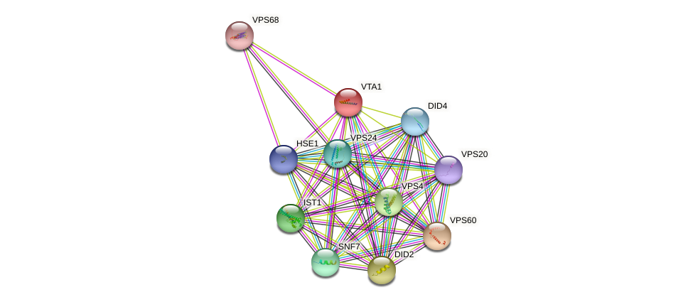 VTA1 protein (Saccharomyces cerevisiae) - STRING interaction network
