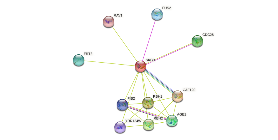 SKG3 protein (Saccharomyces cerevisiae) - STRING interaction network