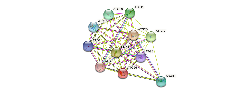 ATG26 protein (Saccharomyces cerevisiae) - STRING interaction network