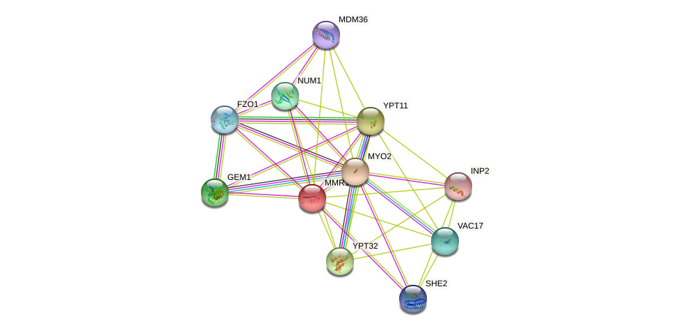 MMR1 protein (Saccharomyces cerevisiae) - STRING interaction network