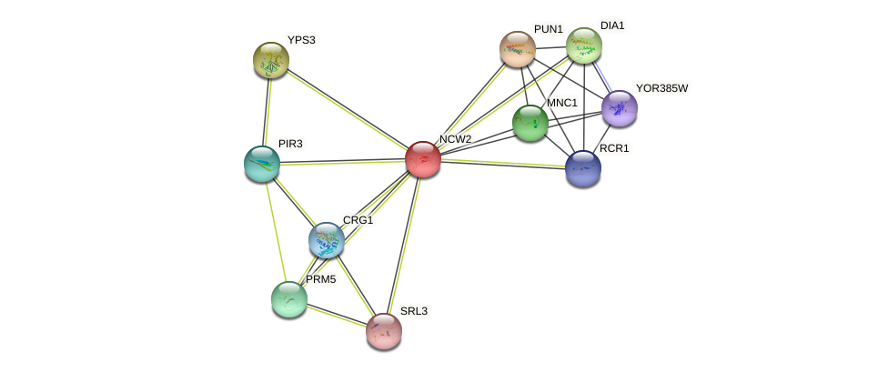 NCW2 protein (Saccharomyces cerevisiae) - STRING interaction network
