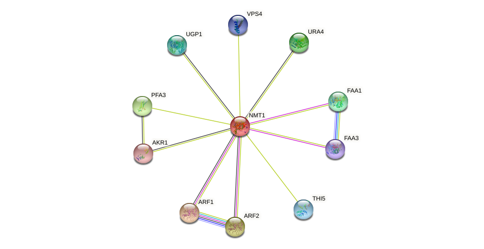 NMT1 protein (Saccharomyces cerevisiae) - STRING interaction network