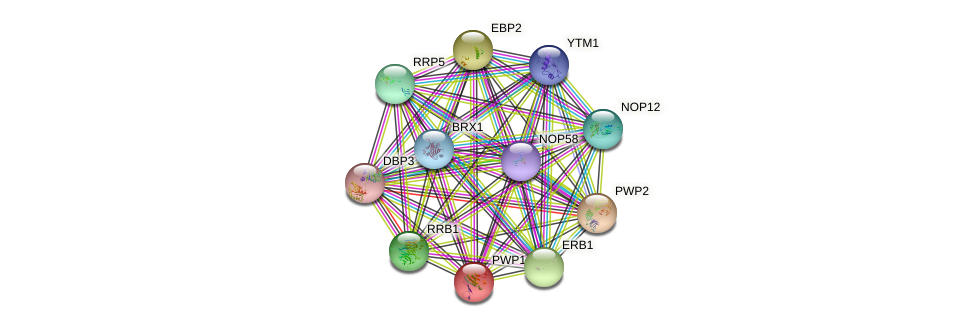 PWP1 protein (Saccharomyces cerevisiae) - STRING interaction network