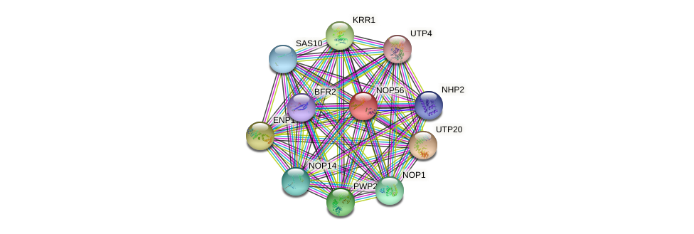 NOP56 protein (Saccharomyces cerevisiae) - STRING interaction network