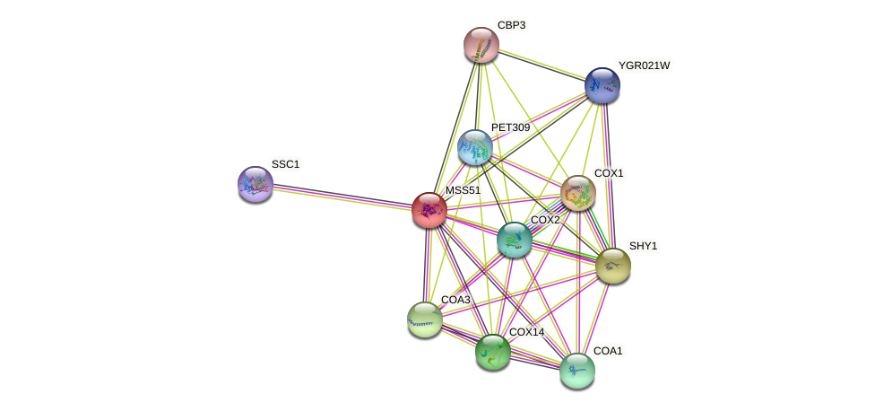 MSS51 protein (Saccharomyces cerevisiae) - STRING interaction network