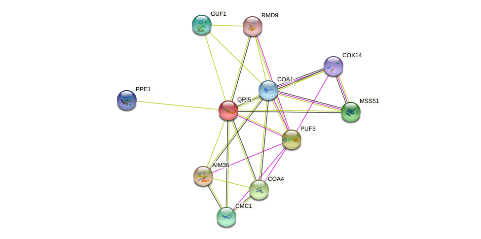 QRI5 protein (Saccharomyces cerevisiae) - STRING interaction network