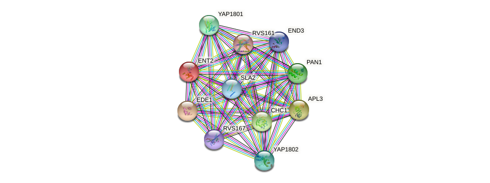 ENT2 protein (Saccharomyces cerevisiae) - STRING interaction network