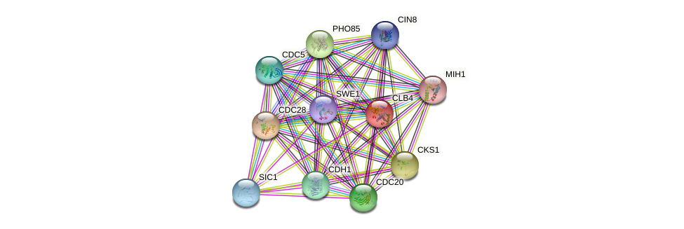 CLB4 protein (Saccharomyces cerevisiae) - STRING interaction network