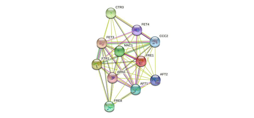 FRE1 protein (Saccharomyces cerevisiae) - STRING interaction network