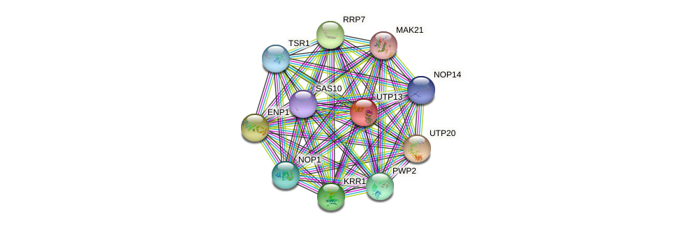 UTP13 protein (Saccharomyces cerevisiae) - STRING interaction network