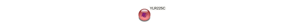 YLR225C protein (Saccharomyces cerevisiae) - STRING interaction network