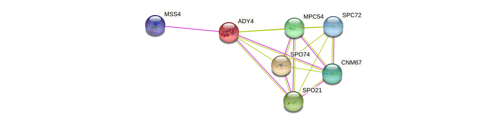 ADY4 protein (Saccharomyces cerevisiae) - STRING interaction network