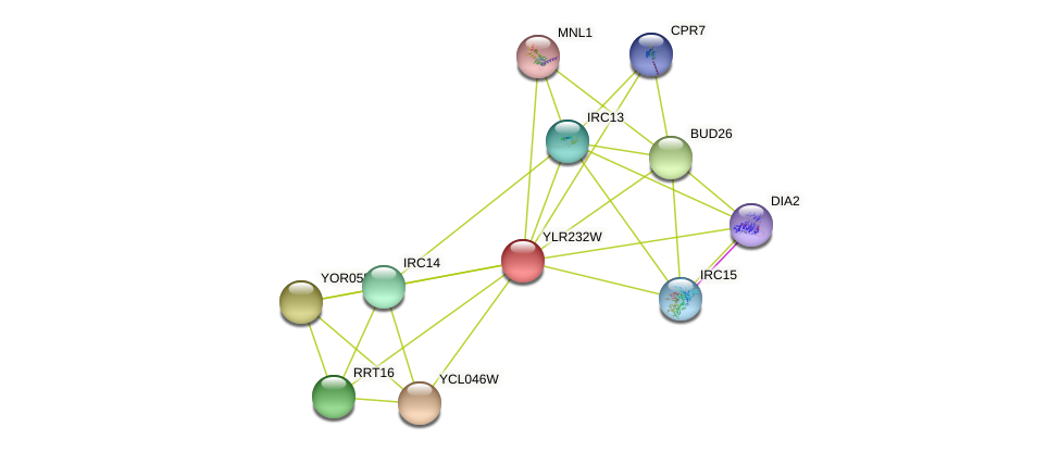 YLR232W protein (Saccharomyces cerevisiae) - STRING interaction network