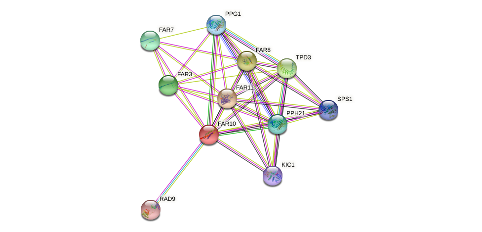 FAR10 protein (Saccharomyces cerevisiae) - STRING interaction network