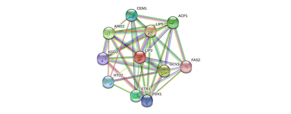 LIP2 protein (Saccharomyces cerevisiae) - STRING interaction network