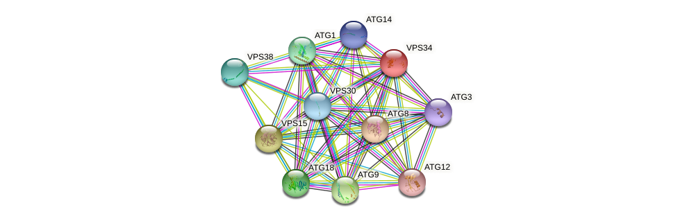 VPS34 protein (Saccharomyces cerevisiae) - STRING interaction network