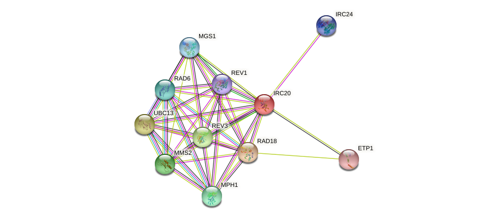 IRC20 protein (Saccharomyces cerevisiae) - STRING interaction network