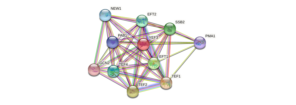 YEF3 protein (Saccharomyces cerevisiae) - STRING interaction network