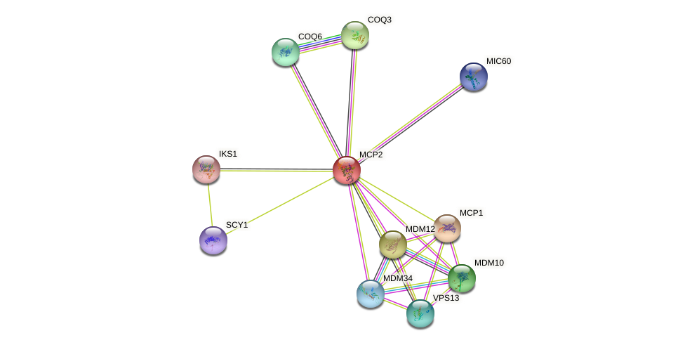 MCP2 protein (Saccharomyces cerevisiae) - STRING interaction network