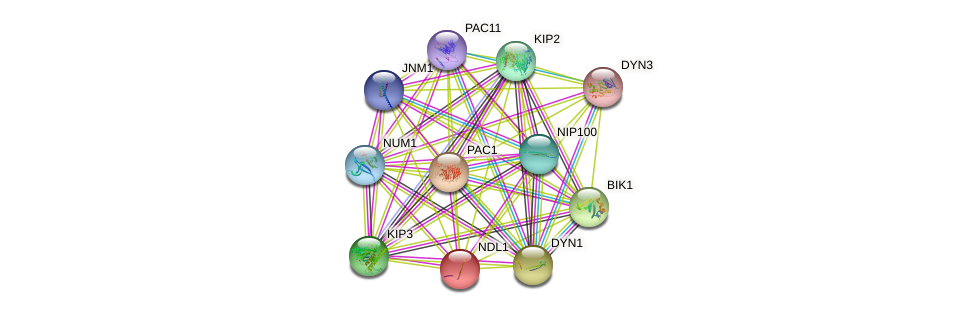 NDL1 protein (Saccharomyces cerevisiae) - STRING interaction network