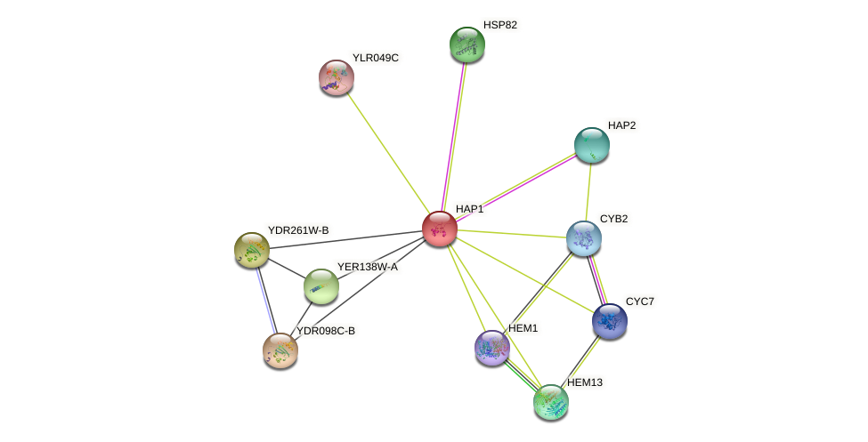 HAP1 protein (Saccharomyces cerevisiae) - STRING interaction network