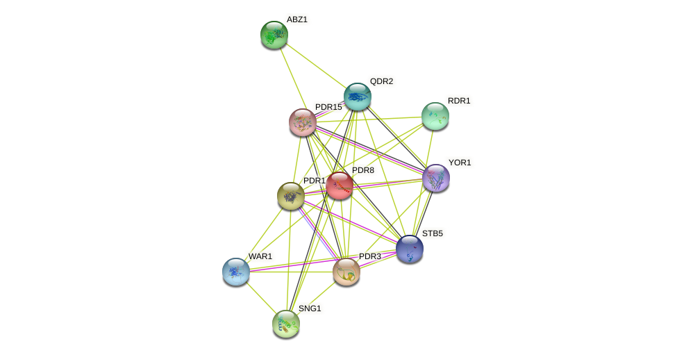 PDR8 protein (Saccharomyces cerevisiae) - STRING interaction network