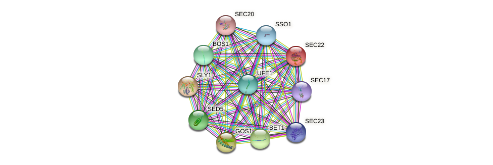 SEC22 protein (Saccharomyces cerevisiae) - STRING interaction network