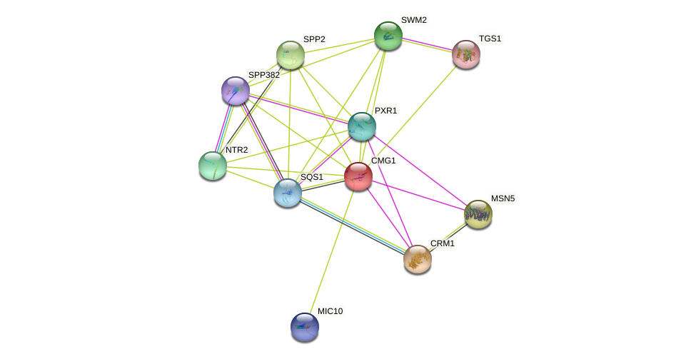 CMG1 protein (Saccharomyces cerevisiae) - STRING interaction network