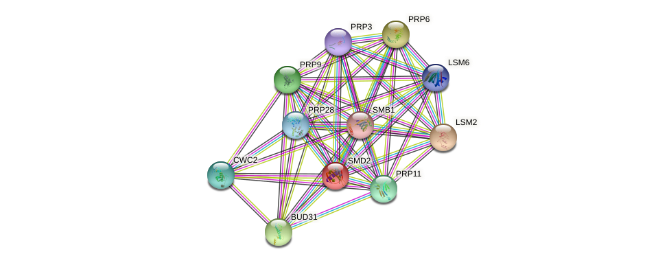 SMD2 protein (Saccharomyces cerevisiae) - STRING interaction network