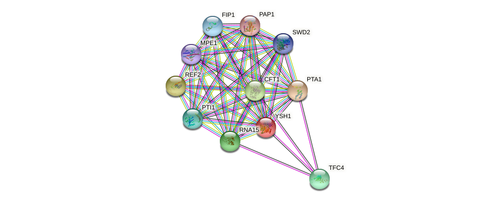 YSH1 protein (Saccharomyces cerevisiae) - STRING interaction network