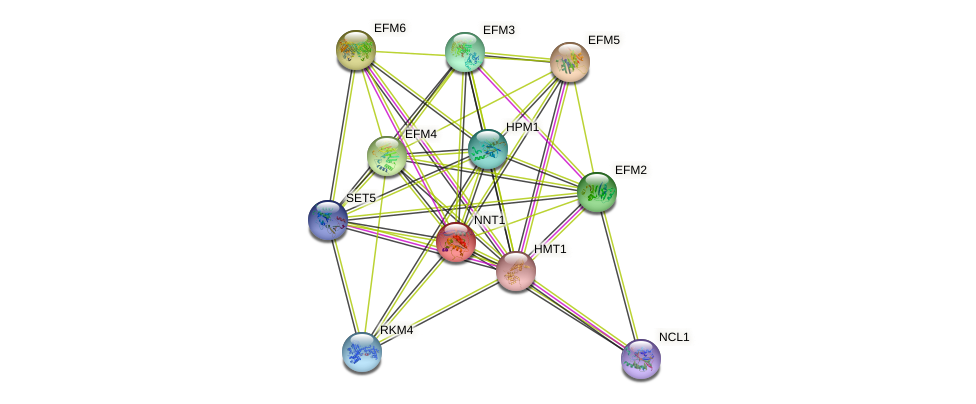 NNT1 protein (Saccharomyces cerevisiae) - STRING interaction network