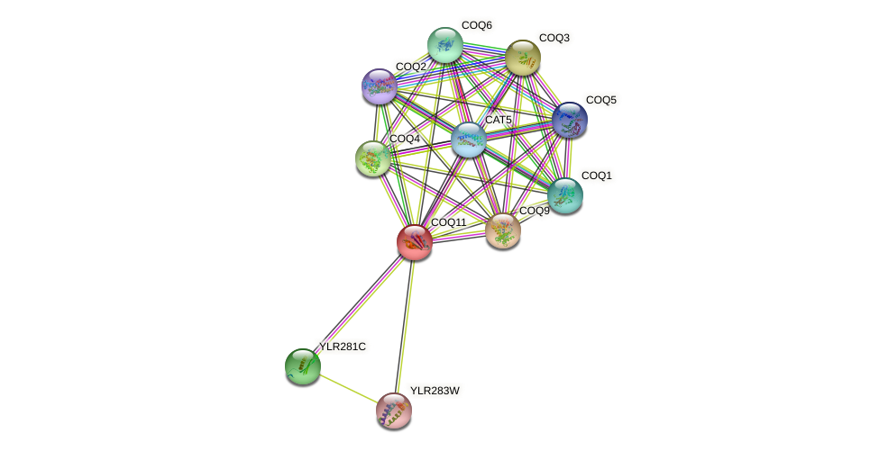 COQ11 protein (Saccharomyces cerevisiae) - STRING interaction network